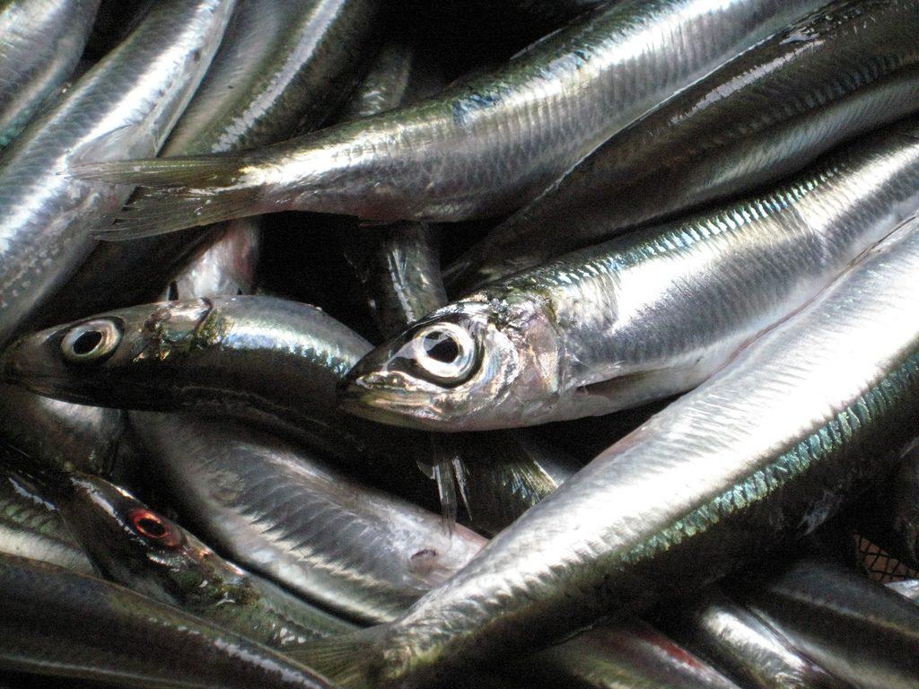 sardine et vitamine D